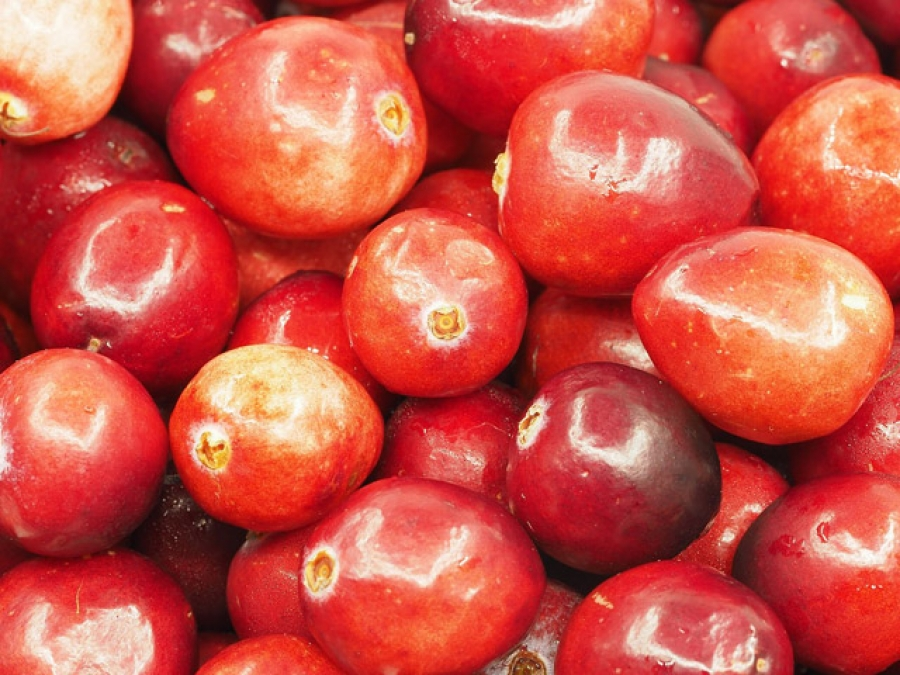 how to make cranberry seed oil
